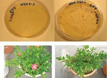 Sanitize Soil