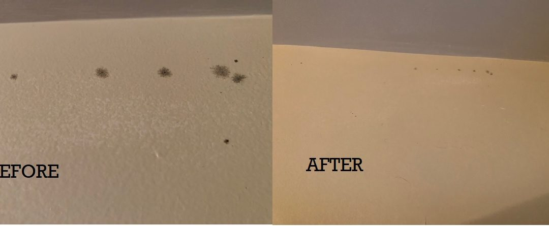 Stopping the spread of Black Mold